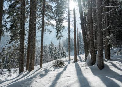 Winter season in Val di Sole